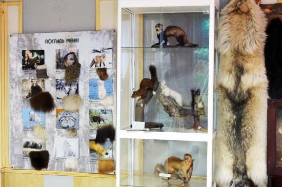 Охотничье-промысловые птицы и звери Сибири