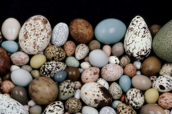 «Хрупкий мир: яйца и гнёзда птиц»