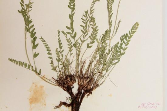 Ботаническая коллекция