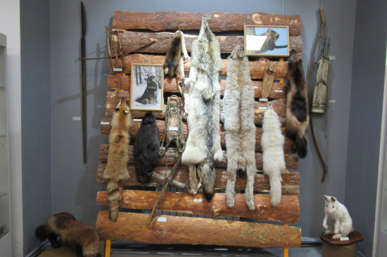 Выставка «Охотничий промысел в Енисейской Сибири» в Ачинске