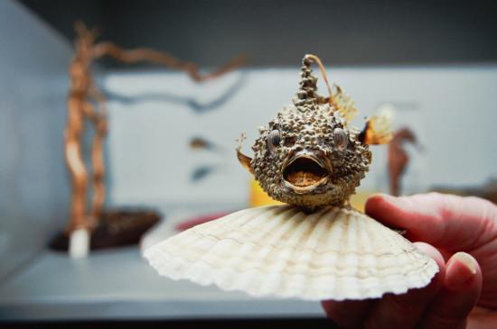 Экскурсия по фондам «Тайны музейных кладовых»