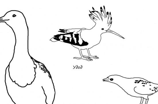 Сибирские животные и птицы — в раскраске от краеведческого музея