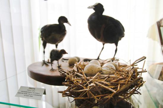 Любите яйца? Проверьте, что вы знаете о яйцах птиц. Познавательный тест музея