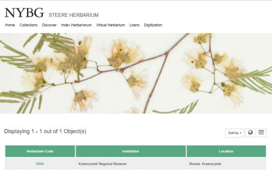 Международная база Index Herbariorum NYBG присвоила уникальный идентификатор Гербарию Красноярского краеведческого музея