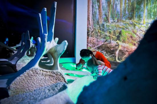 Экскурсия «Музейный дайвинг» с мастер-классом «Китовая почта»